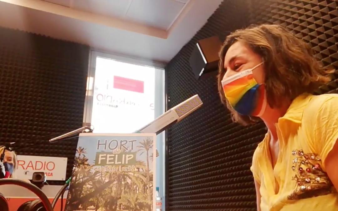 Hort de Felip en TeleElx